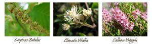 fiori-banda01